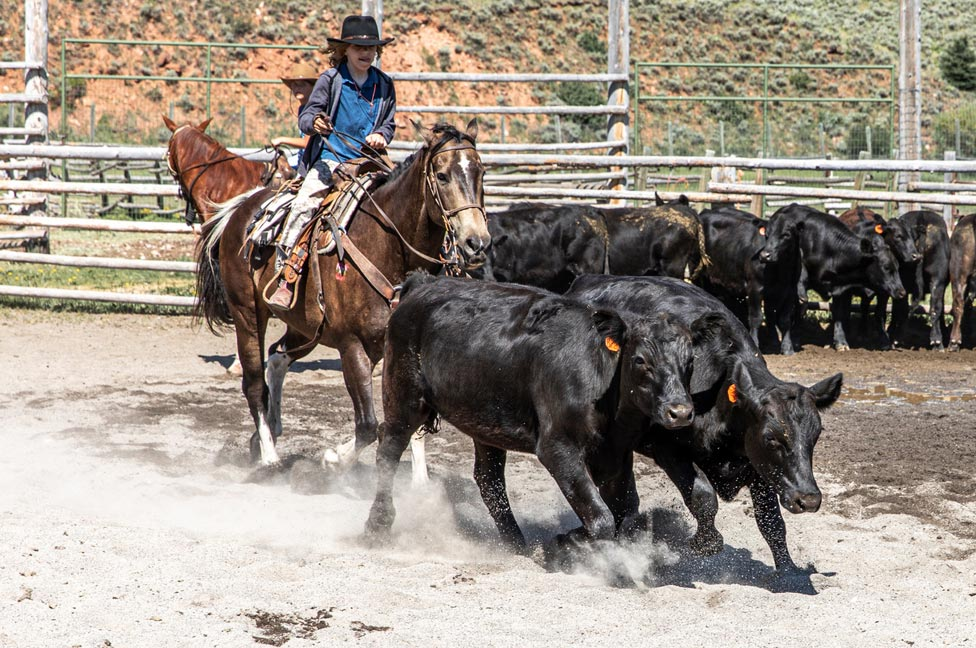 Junior Cattle Wrangling by Jessica Lee