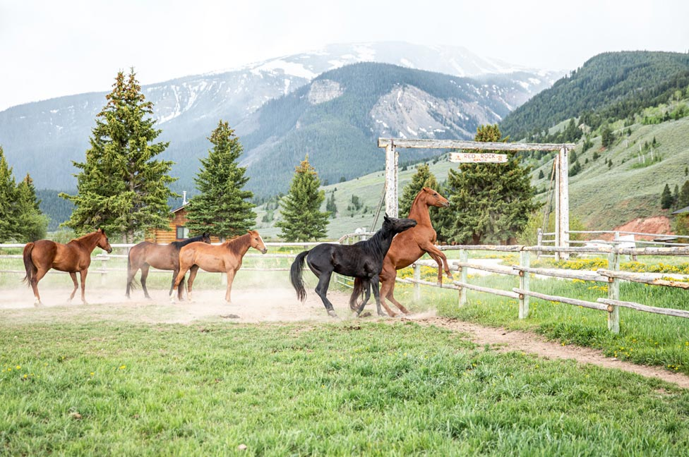 Horses at Red Rock Ranch by Jessica Lee